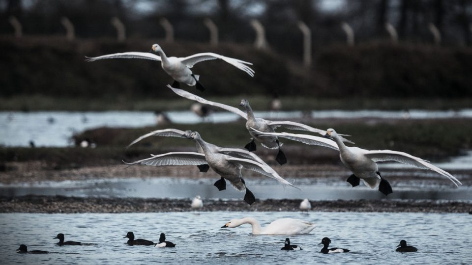 Mitsubishi Flight of the Swans